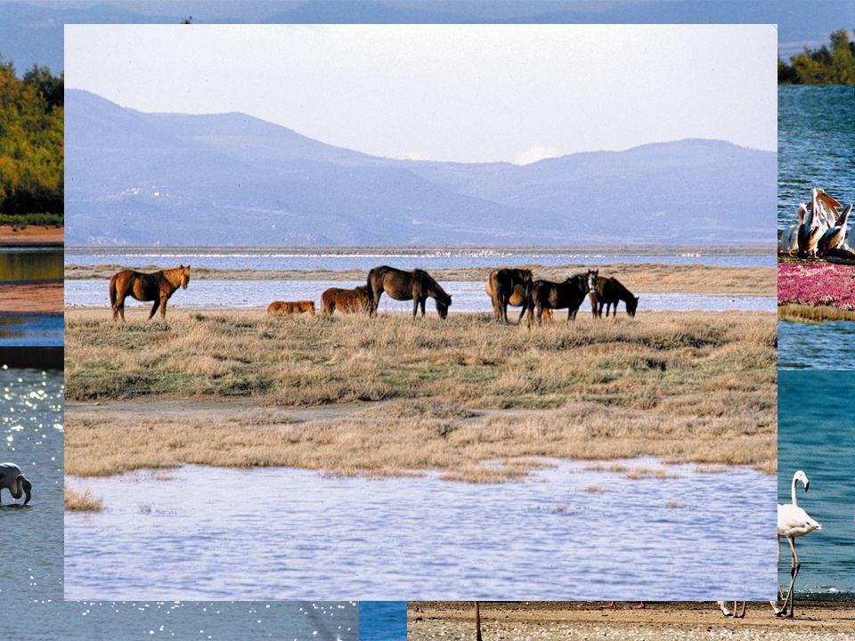 Un des biotopes les plus important dEurope en raison de sa superficie et des 263 espèces doiseaux qui y nichent,hivernent ou font escale.