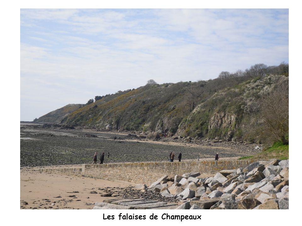 Les falaises de Champeaux