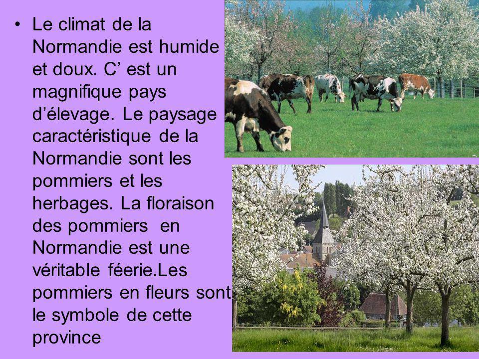 Le climat de la Normandie est humide et doux. C est un magnifique pays délevage. Le paysage caractéristique de la Normandie sont les pommiers et les h