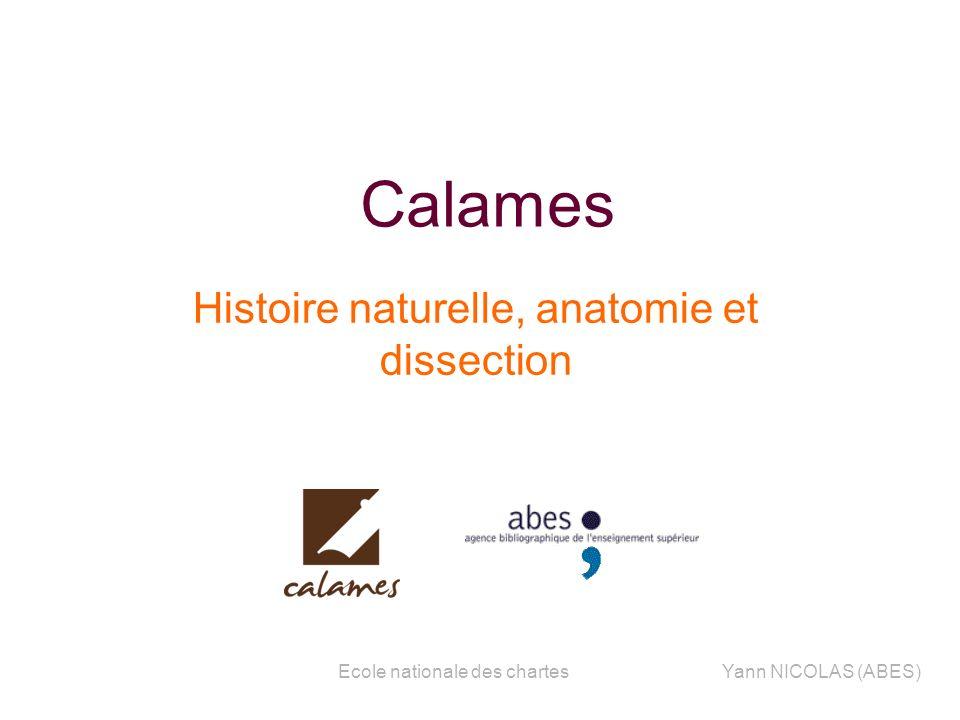 Ecole nationale des chartesYann NICOLAS (ABES) Calames Histoire naturelle, anatomie et dissection