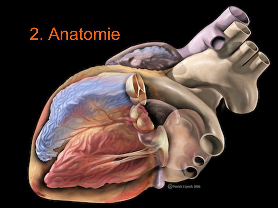 Calames – Ecole des chartes 23 2. Anatomie