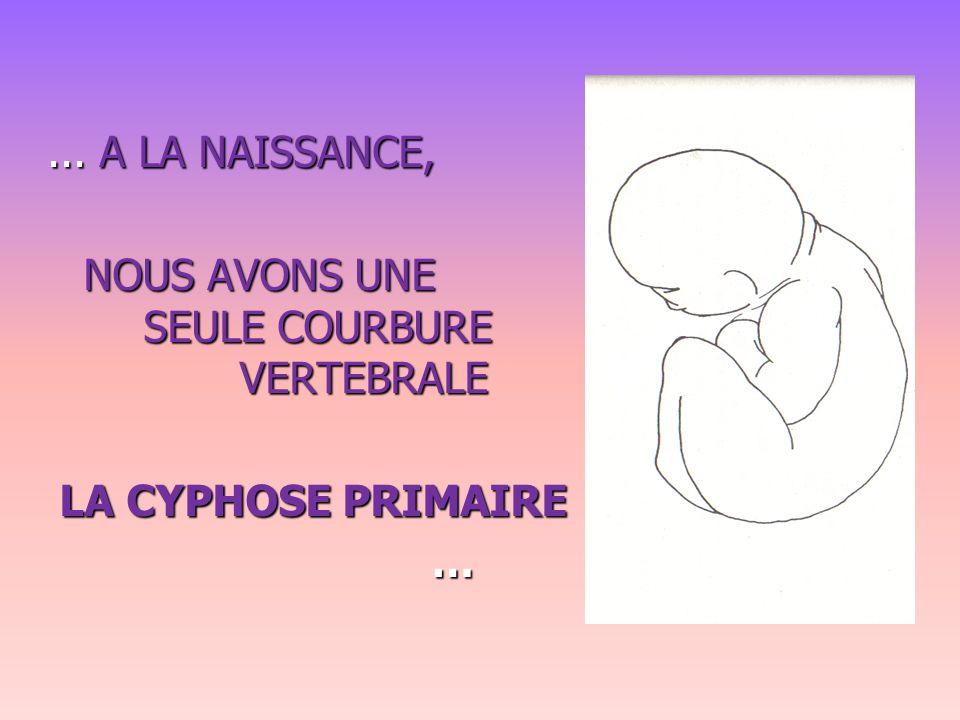 ... A LA NAISSANCE, NOUS AVONS UNE SEULE COURBURE VERTEBRALE LA CYPHOSE PRIMAIRE LA CYPHOSE PRIMAIRE…