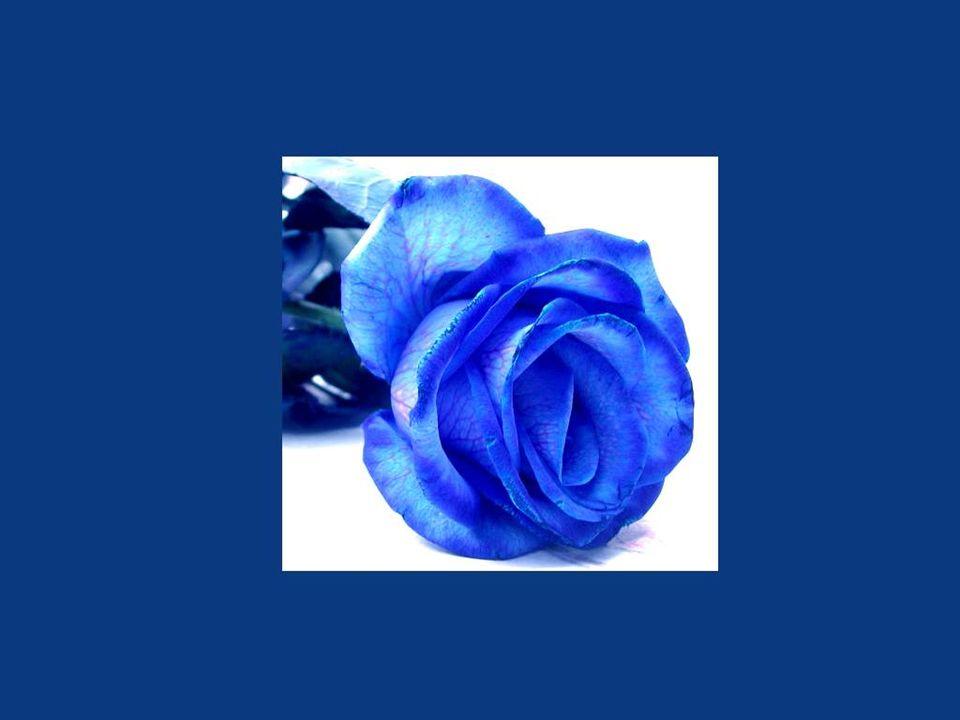 Terminons avec une question de connaissance générale en botanique:Existe-t-il des roses bleues? Cliquez sur la fleur bleue ci-dessus pour connaître la