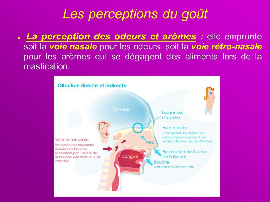 La perception des odeurs et arômes : elle emprunte soit la voie nasale pour les odeurs, soit la voie rétro-nasale pour les arômes qui se dégagent des