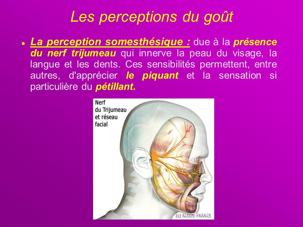 La perception somesthésique : due à la présence du nerf trijumeau qui innerve la peau du visage, la langue et les dents. Ces sensibilités permettent,