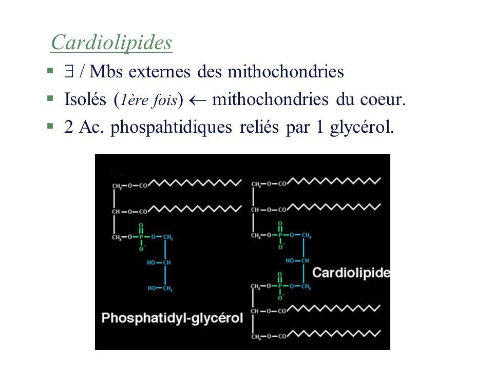 Cardiolipides § / Mbs externes des mithochondries §Isolés ( 1ère fois ) mithochondries du coeur. §2 Ac. phospahtidiques reliés par 1 glycérol.