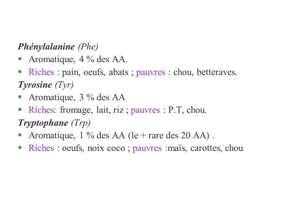 Phénylalanine (Phe) §Aromatique, 4 % des AA. §Riches : pain, oeufs, abats ; pauvres : chou, betteraves. Tyrosine (Tyr) §Aromatique, 3 % des AA §Riches