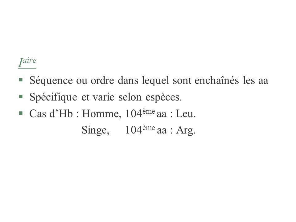 I aire §Séquence ou ordre dans lequel sont enchaînés les aa §Spécifique et varie selon espèces. §Cas dHb : Homme, 104 ème aa : Leu. Singe, 104 ème aa