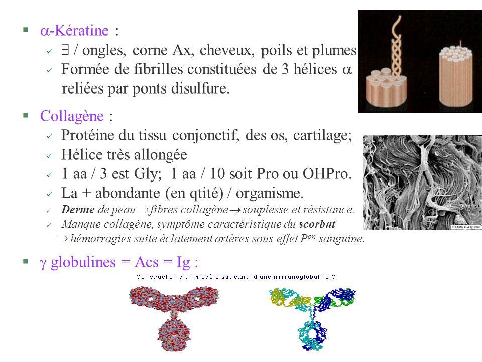 § -Kératine : / ongles, corne Ax, cheveux, poils et plumes Formée de fibrilles constituées de 3 hélices reliées par ponts disulfure. §Collagène : ü Pr
