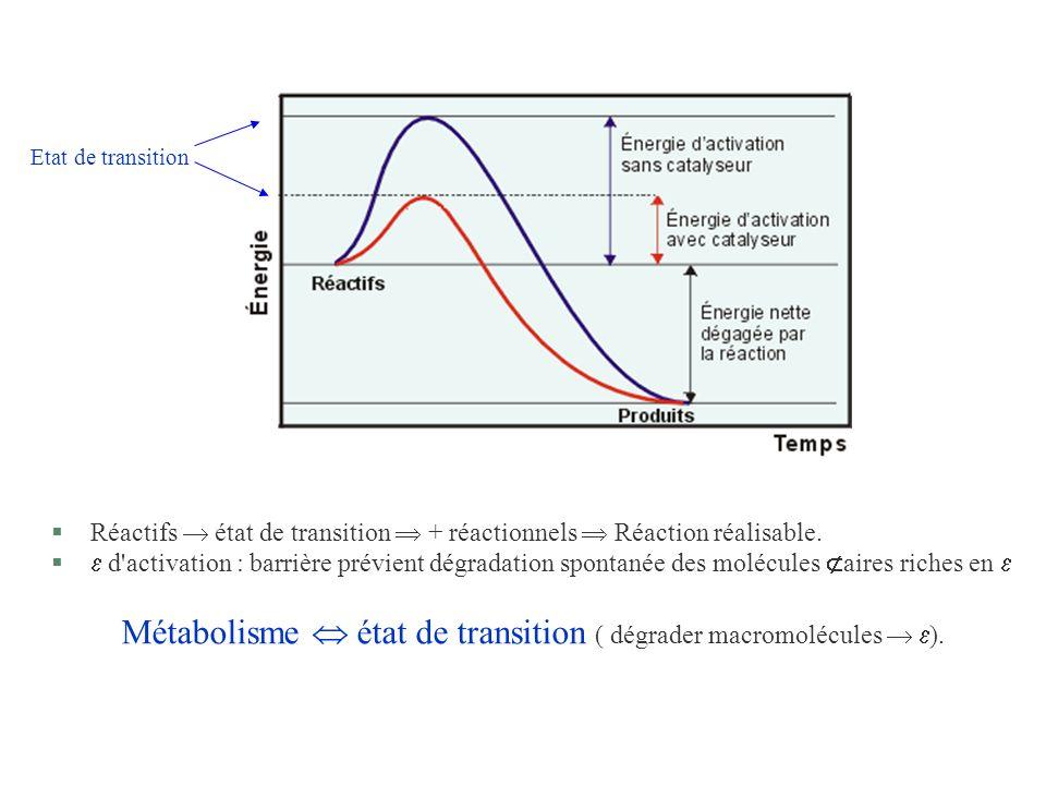 §Réactifs état de transition + réactionnels Réaction réalisable. § d'activation : barrière prévient dégradation spontanée des molécules aires riches e