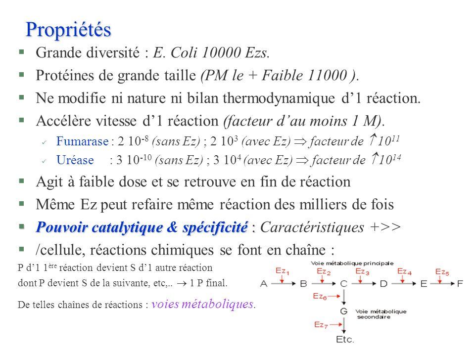 Propriétés §Grande diversité : E. Coli 10000 Ezs. §Protéines de grande taille (PM le + Faible 11000 ). §Ne modifie ni nature ni bilan thermodynamique