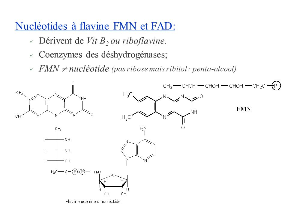 Nucléotides à flavine FMN et FAD: Dérivent de Vit B 2 ou riboflavine. Coenzymes des déshydrogénases; FMN nucléotide (pas ribose mais ribitol : penta-a