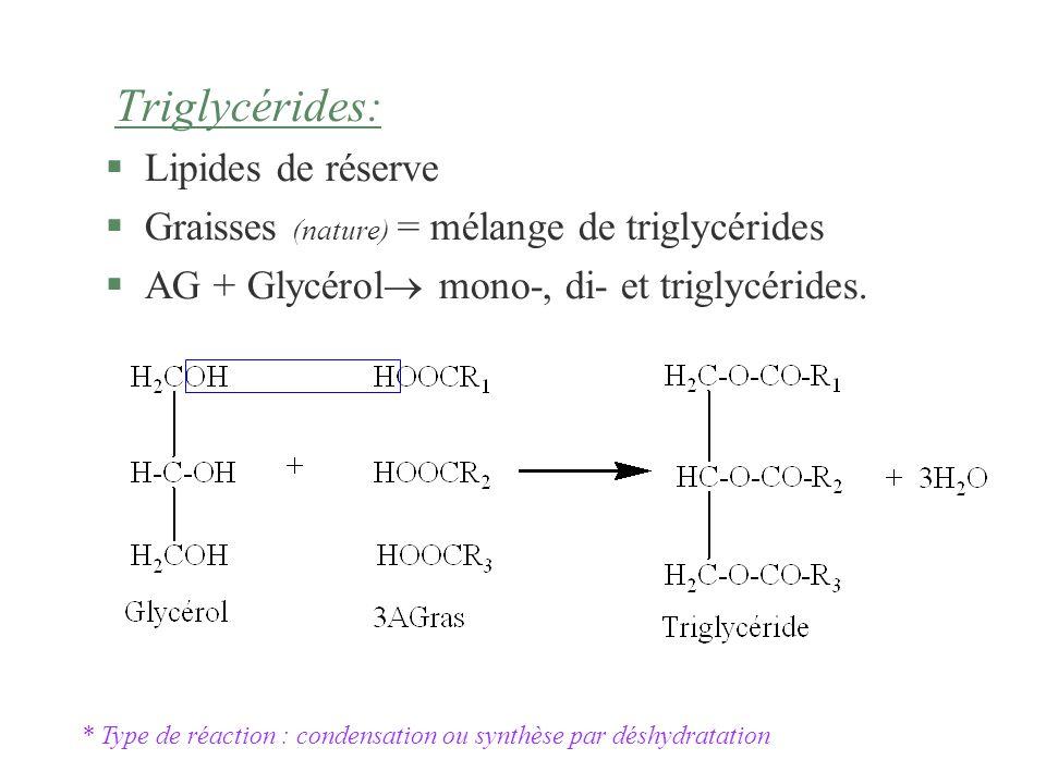 Triglycérides: §Lipides de réserve §Graisses (nature) = mélange de triglycérides §AG + Glycérol mono-, di- et triglycérides. * Type de réaction : cond