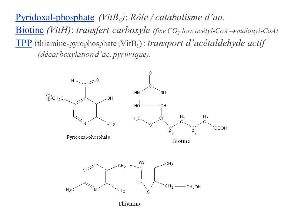 Pyridoxal-phosphate (VitB 6 ): Rôle / catabolisme daa. Biotine (VitH): transfert carboxyle (fixe CO 2 lors acétyl-CoA malonyl-CoA) TPP (thiamine-pyrop