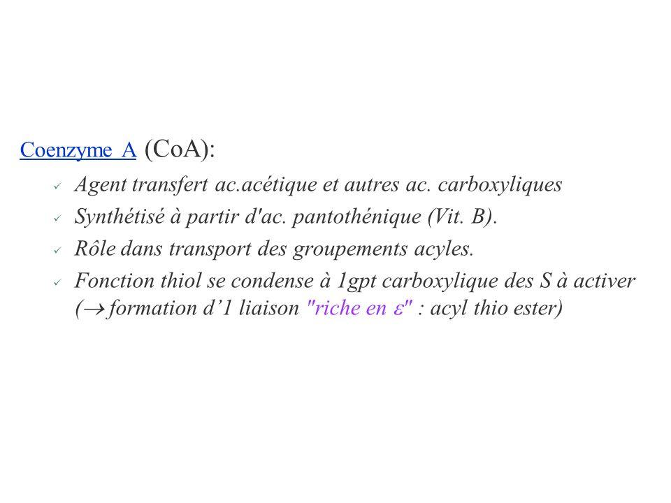 Coenzyme A (CoA): Agent transfert ac.acétique et autres ac. carboxyliques Synthétisé à partir d'ac. pantothénique (Vit. B). Rôle dans transport des gr