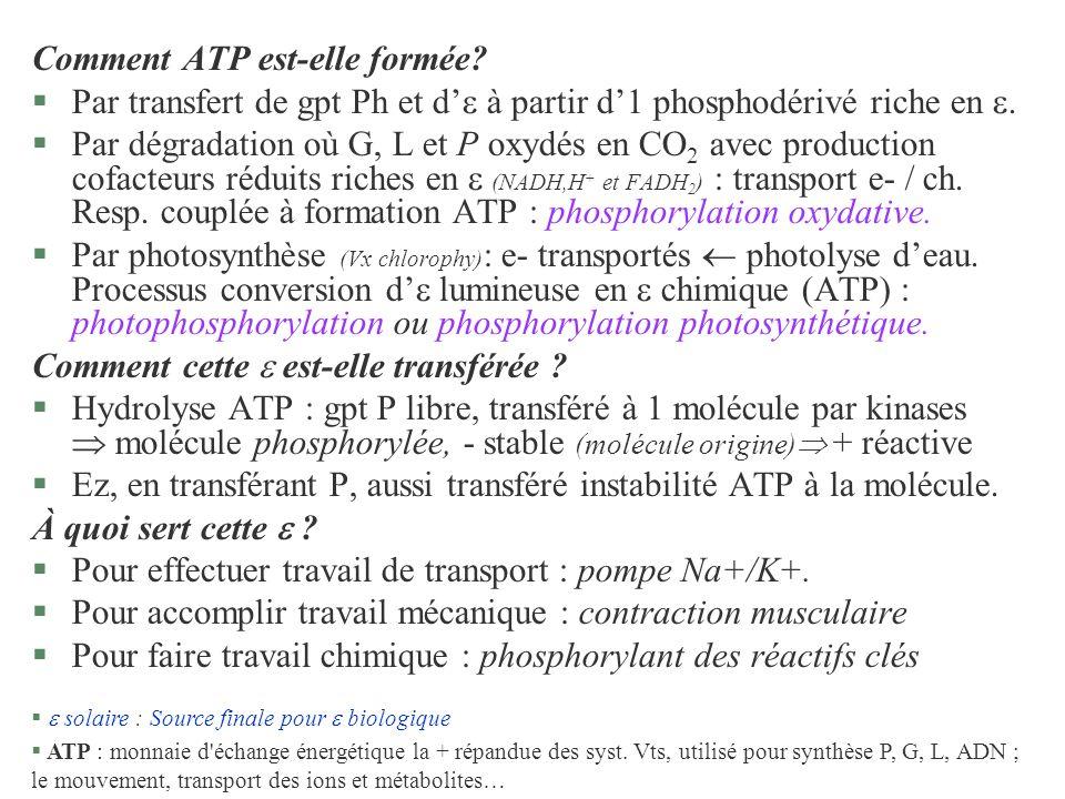 Comment ATP est-elle formée? §Par transfert de gpt Ph et d à partir d1 phosphodérivé riche en. §Par dégradation où G, L et P oxydés en CO 2 avec produ