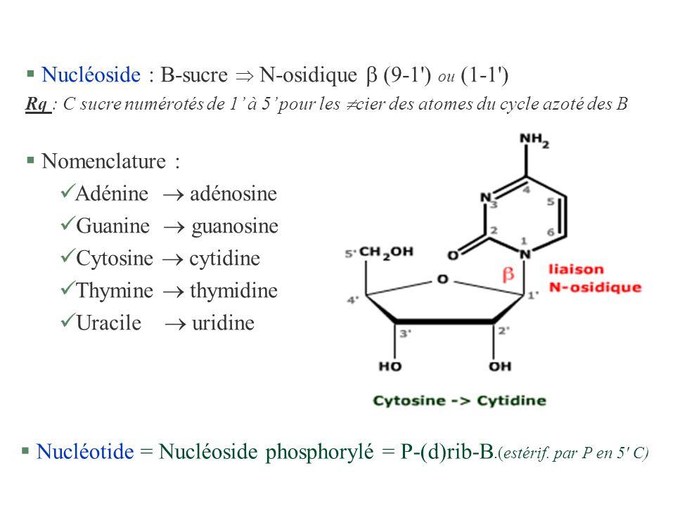 § Nucléoside : B-sucre N-osidique (9-1') ou (1-1') Rq : C sucre numérotés de 1 à 5 pour les cier des atomes du cycle azoté des B § Nomenclature : ü Ad