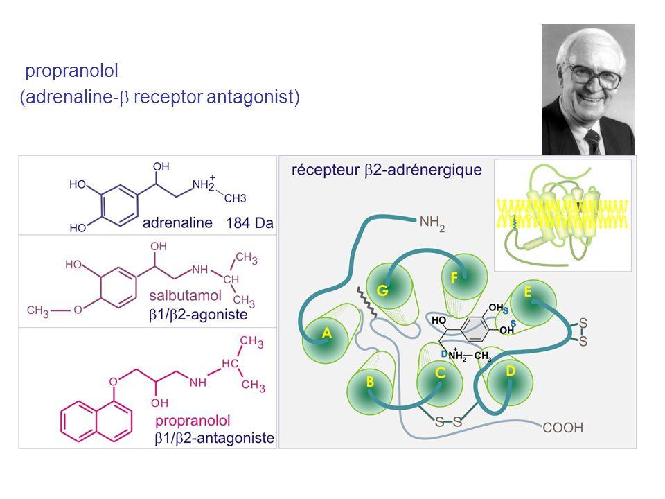 propranolol (adrenaline- receptor antagonist)