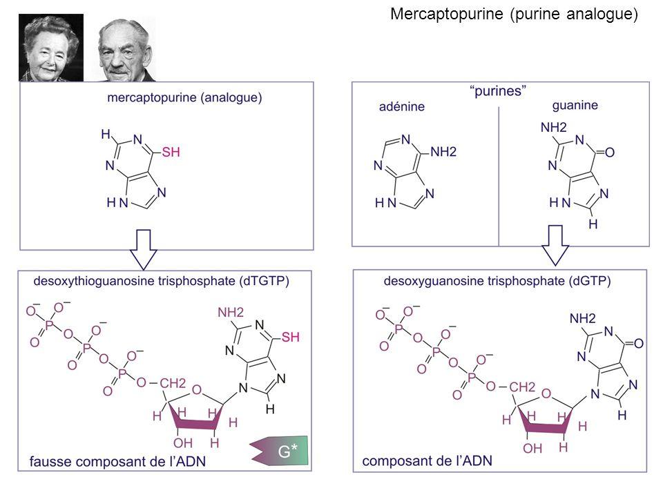 Mercaptopurine (purine analogue)