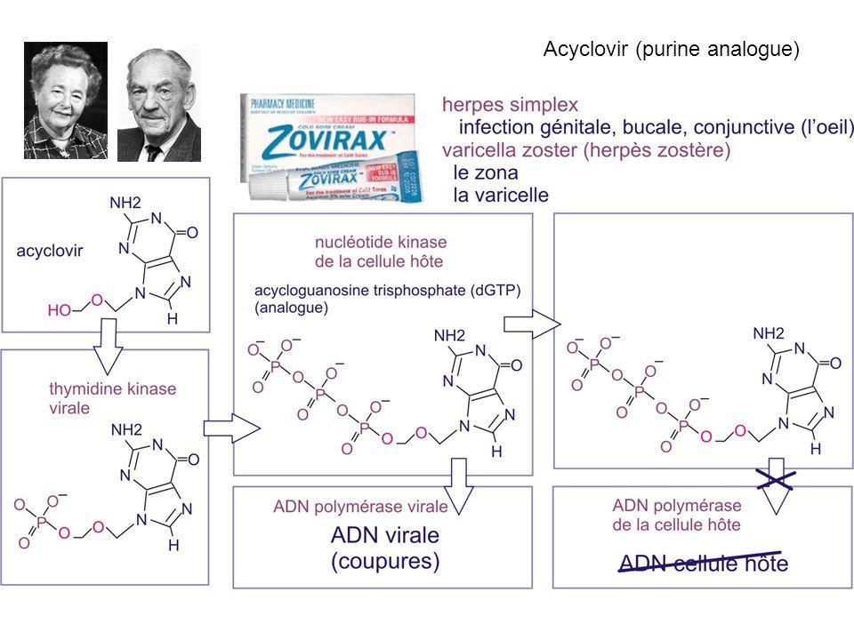 Acyclovir (purine analogue)