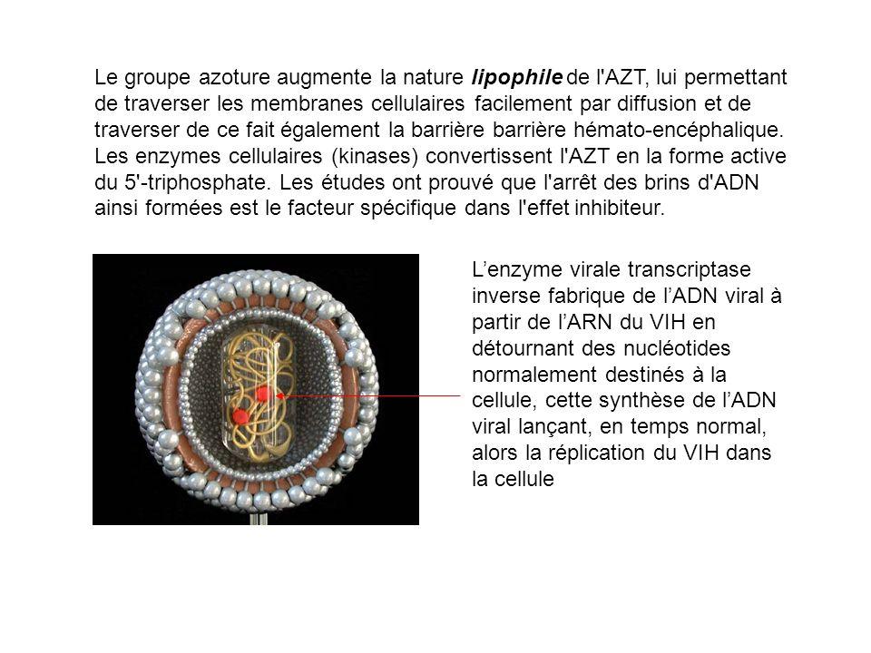 Le groupe azoture augmente la nature lipophile de l'AZT, lui permettant de traverser les membranes cellulaires facilement par diffusion et de traverse