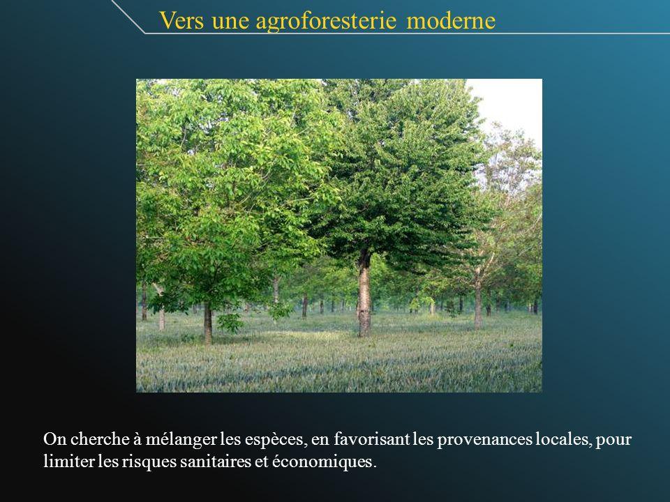 Vers une agroforesterie moderne On cherche à mélanger les espèces, en favorisant les provenances locales, pour limiter les risques sanitaires et écono