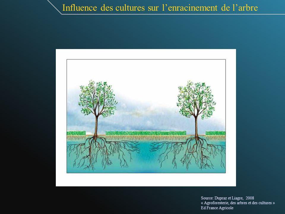 Influence des cultures sur lenracinement de larbre Source: Dupraz et Liagre, 2008 « Agroforesterie, des arbres et des cultures » Ed France Agricole