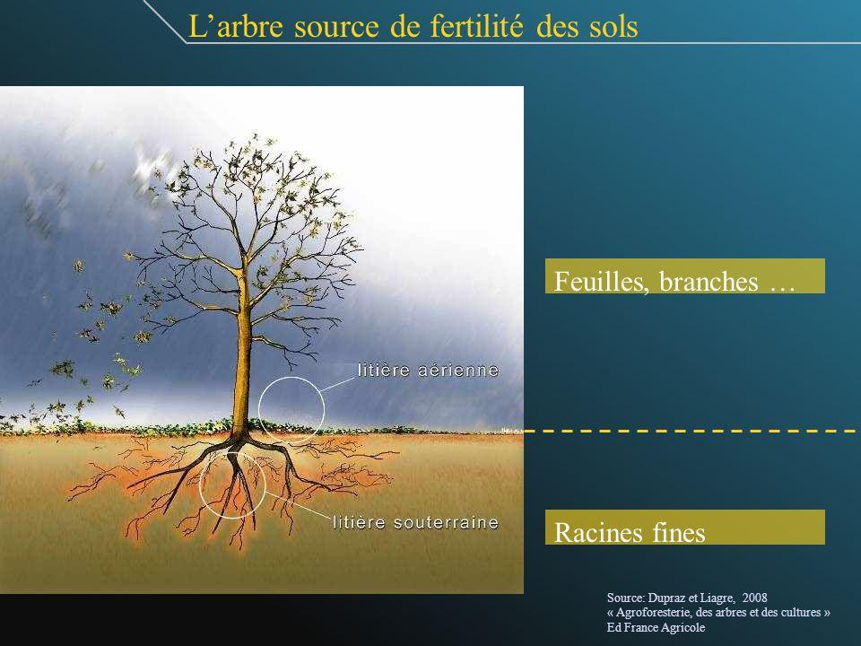 Larbre source de fertilité des sols Feuilles, branches … Racines fines Source: Dupraz et Liagre, 2008 « Agroforesterie, des arbres et des cultures » E