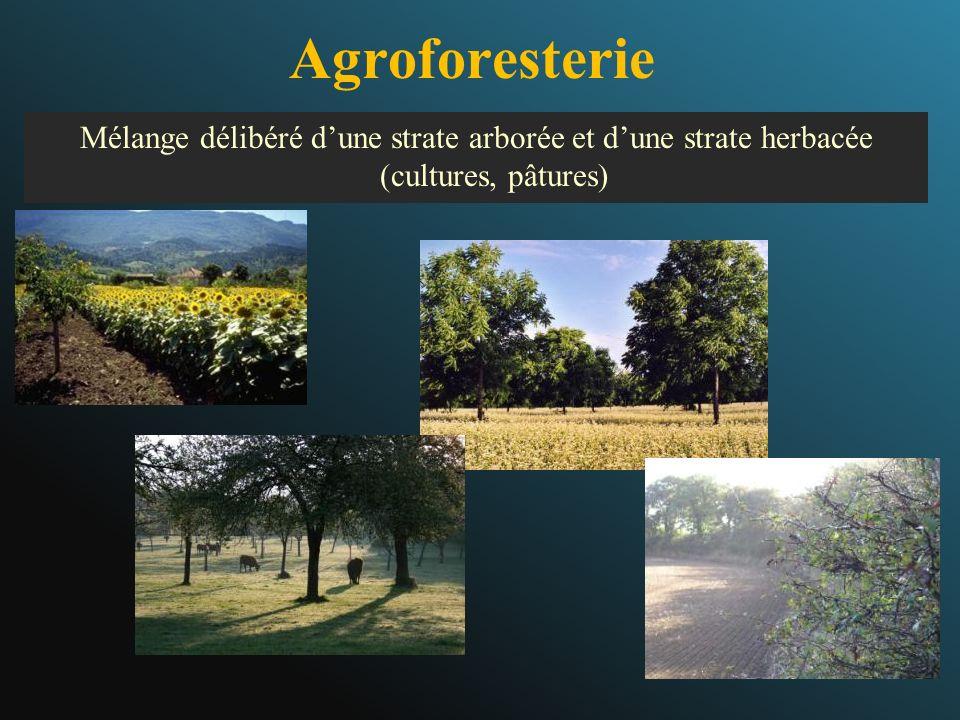 Agroforesterie Mélange délibéré dune strate arborée et dune strate herbacée (cultures, pâtures)