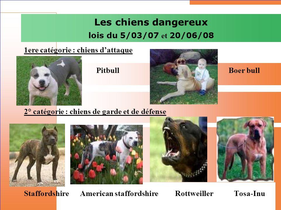 Les chiens dangereux lois du 5/03/07 et 20/06/08 1ere catégorie : chiens dattaque Pitbull Boer bull 2° catégorie : chiens de garde et de défense Staff
