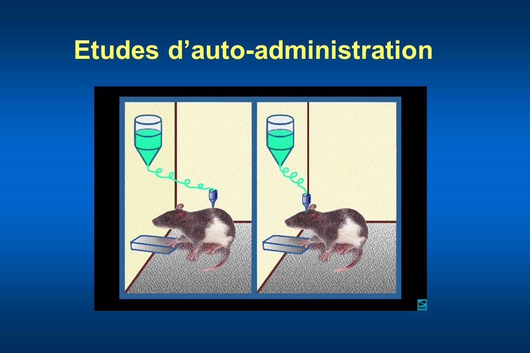 Etudes dauto-administration