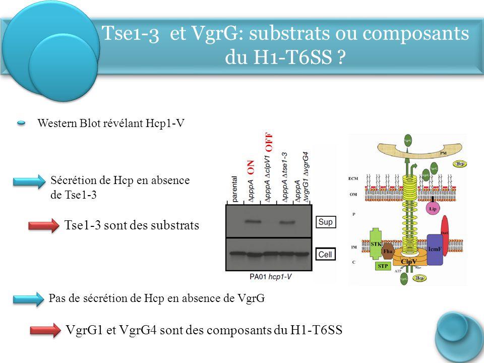Sécrétion de Hcp en absence de Tse1-3 ON OFF Western Blot révélant Hcp1-V Pas de sécrétion de Hcp en absence de VgrG Tse1-3 sont des substrats Tse1-3
