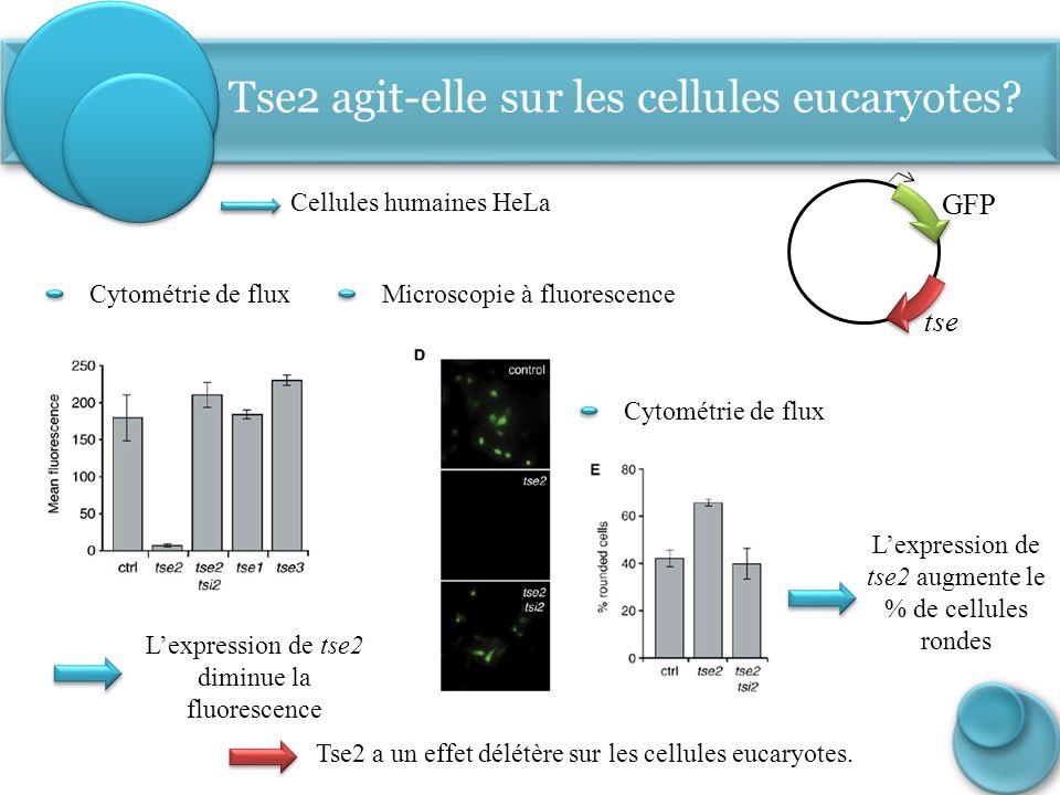 Cytométrie de fluxMicroscopie à fluorescence L'expression de tse2 diminue la fluorescence Cellules humaines HeLa GFP tse Cytométrie de flux L'expressi