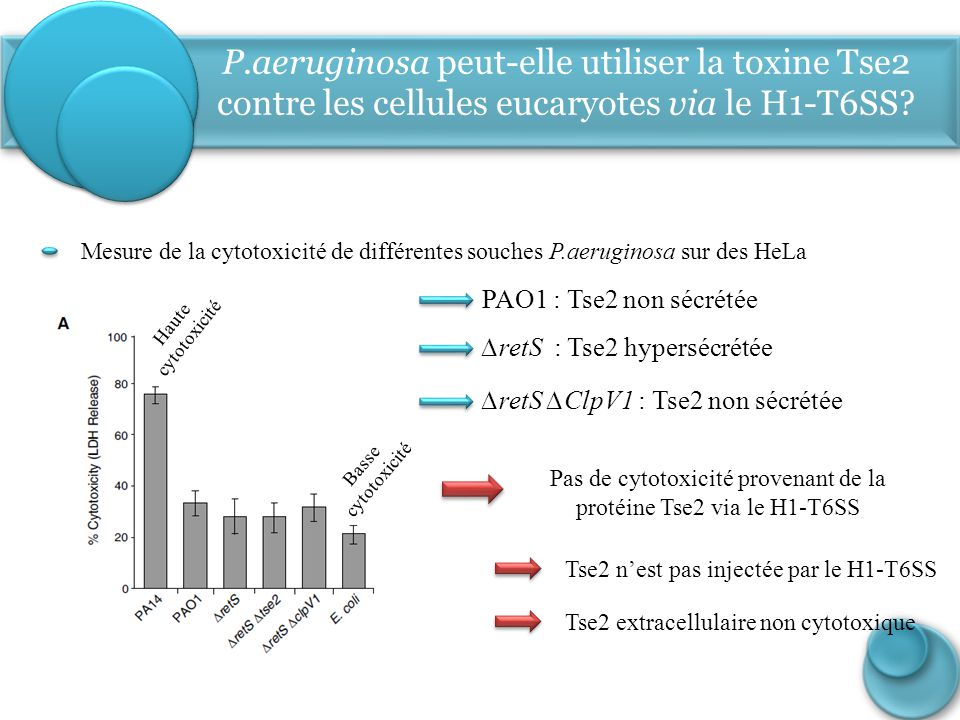 P.aeruginosa peut-elle utiliser la toxine Tse2 contre les cellules eucaryotes via le H1-T6SS? Mesure de la cytotoxicité de différentes souches P.aerug