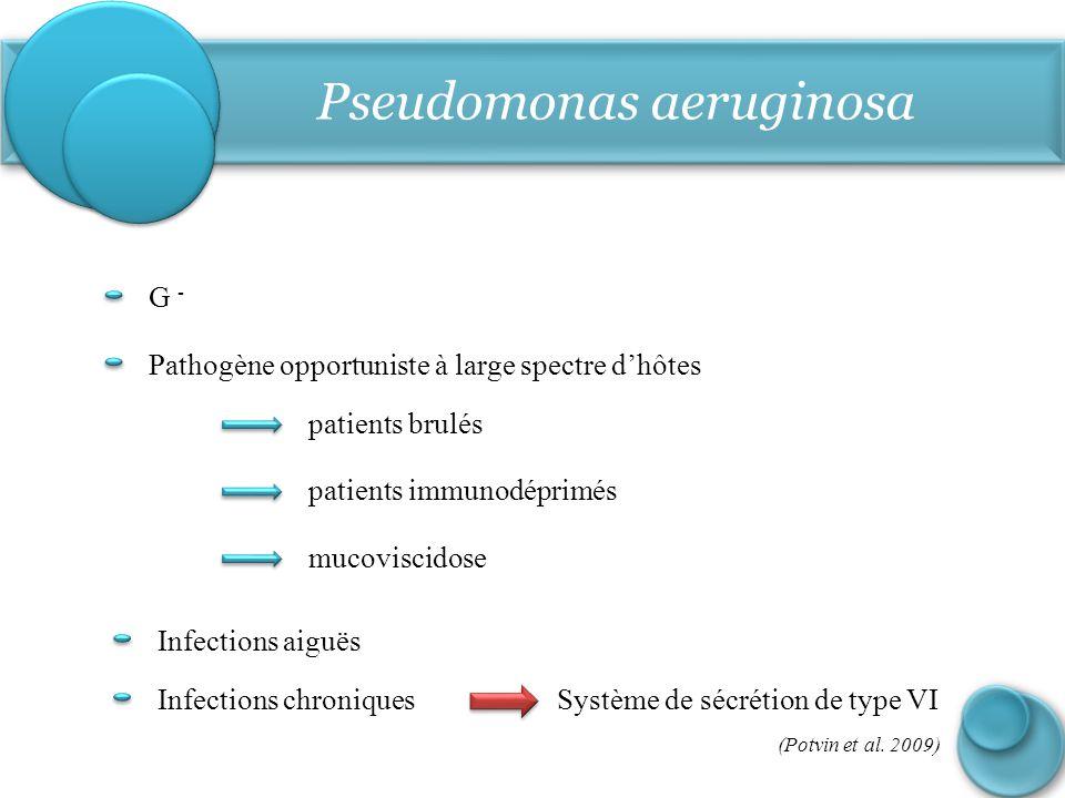 Pseudomonas aeruginosa G - Pathogène opportuniste à large spectre d'hôtes patients brulés patients immunodéprimés mucoviscidose Infections aiguës Infe