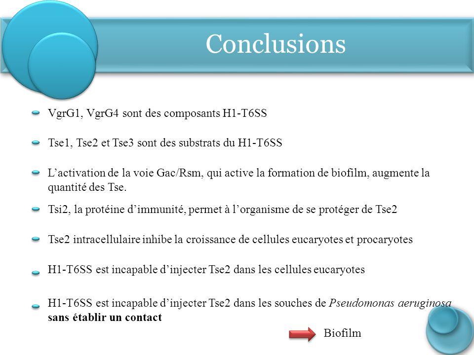 Conclusions VgrG1, VgrG4 sont des composants H1-T6SS L'activation de la voie Gac/Rsm, qui active la formation de biofilm, augmente la quantité des Tse