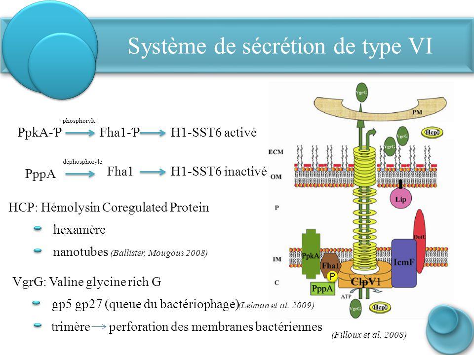 Système de sécrétion de type VI PpkA- Ƥ Fha1- Ƥ H1-SST6 activé phosphoryle PppA P P (Filloux et al. 2008) HCP: Hémolysin Coregulated Protein hexamère