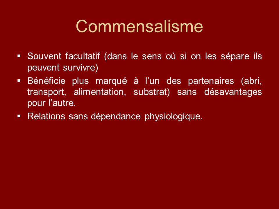 Commensalisme  Souvent facultatif (dans le sens où si on les sépare ils peuvent survivre)  Bénéficie plus marqué à l'un des partenaires (abri, transport, alimentation, substrat) sans désavantages pour l'autre.