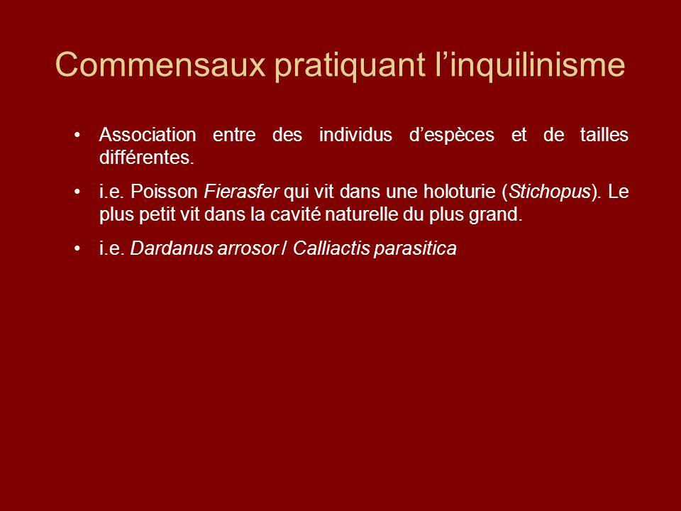 Commensaux pratiquant l'inquilinisme Association entre des individus d'espèces et de tailles différentes. i.e. Poisson Fierasfer qui vit dans une holo