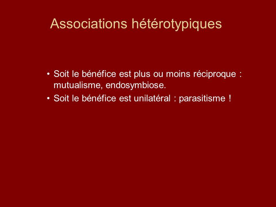 Associations hétérotypiques Soit le bénéfice est plus ou moins réciproque : mutualisme, endosymbiose. Soit le bénéfice est unilatéral : parasitisme !