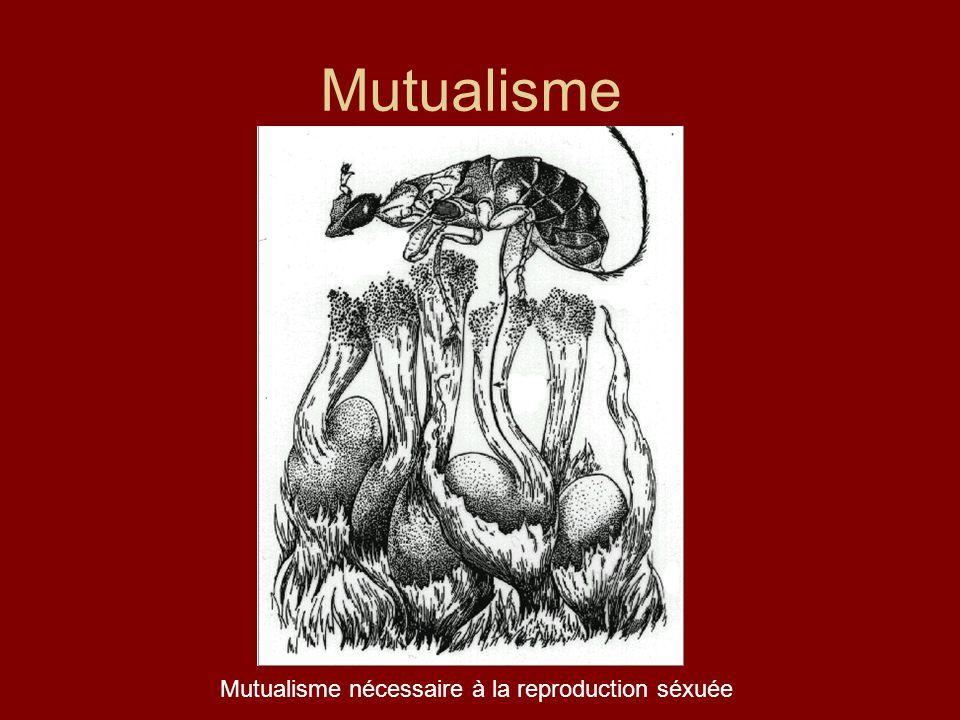 Mutualisme Mutualisme nécessaire à la reproduction séxuée