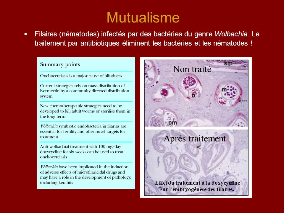 Mutualisme  Filaires (nématodes) infectés par des bactéries du genre Wolbachia. Le traitement par antibiotiques éliminent les bactéries et les némato