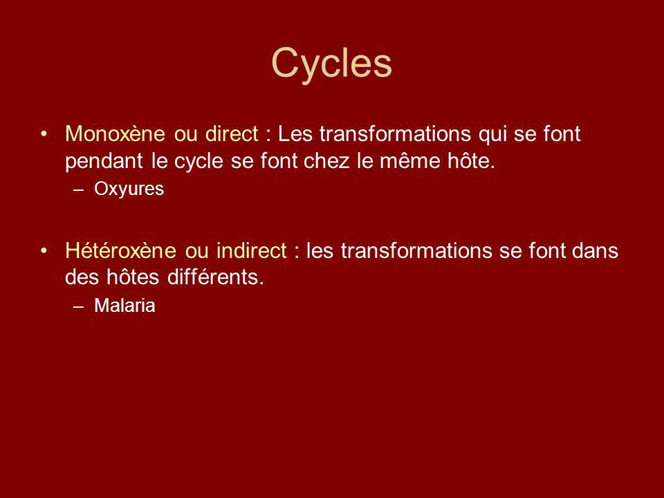 Cycles Monoxène ou direct : Les transformations qui se font pendant le cycle se font chez le même hôte. –Oxyures Hétéroxène ou indirect : les transfor
