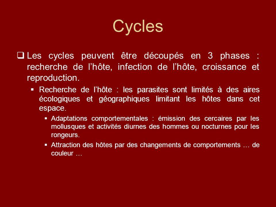 Cycles  Les cycles peuvent être découpés en 3 phases : recherche de l'hôte, infection de l'hôte, croissance et reproduction.  Recherche de l'hôte :