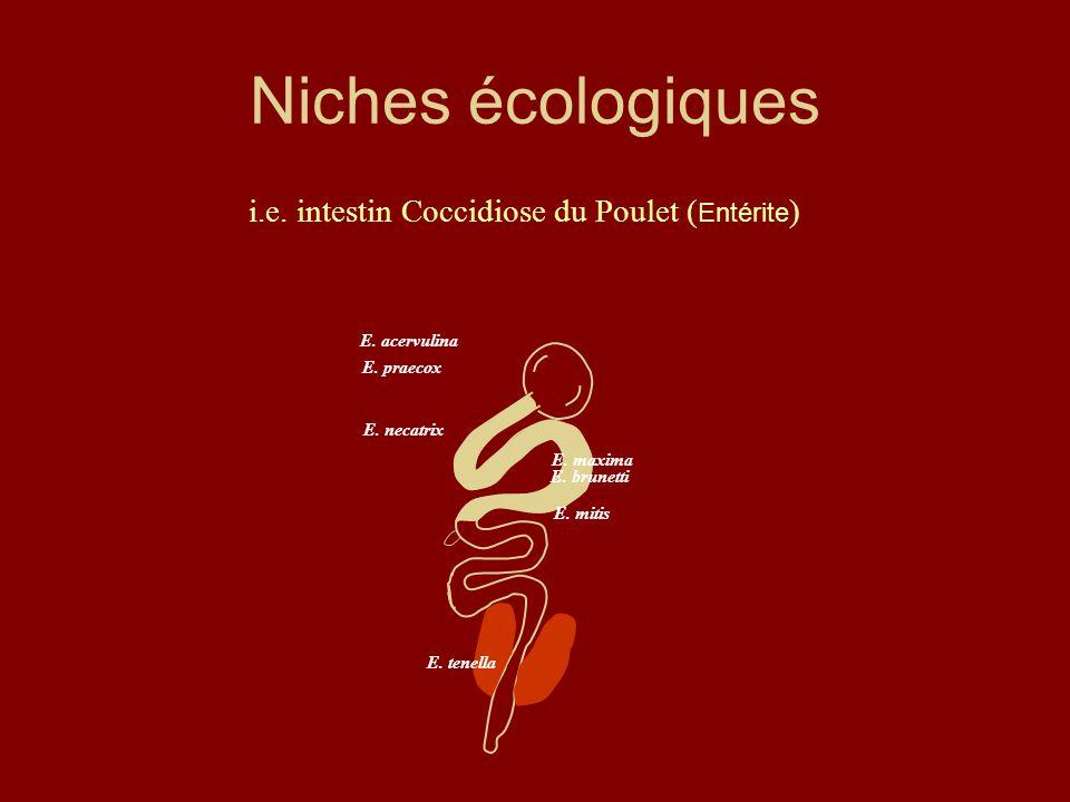 Niches écologiques E. acervulina E. tenella E. praecox E. brunetti E. maxima E. necatrix E. mitis i.e. intestin Coccidiose du Poulet ( Entérite )