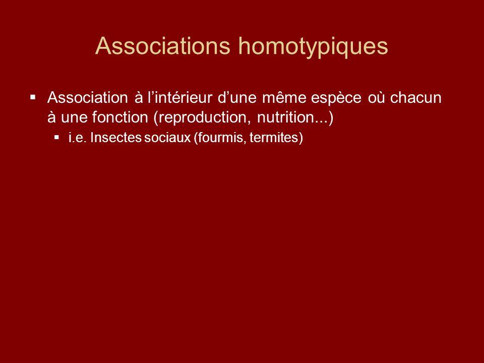 Associations homotypiques  Association à l'intérieur d'une même espèce où chacun à une fonction (reproduction, nutrition...)  i.e. Insectes sociaux