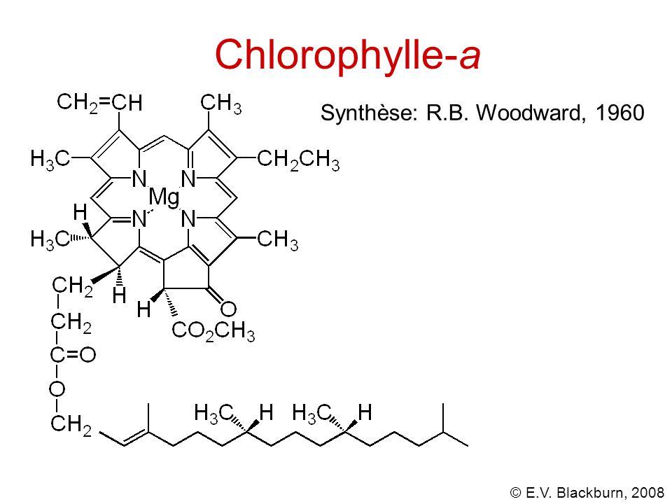 © E.V. Blackburn, 2008 Réactions du glucose avec les amines