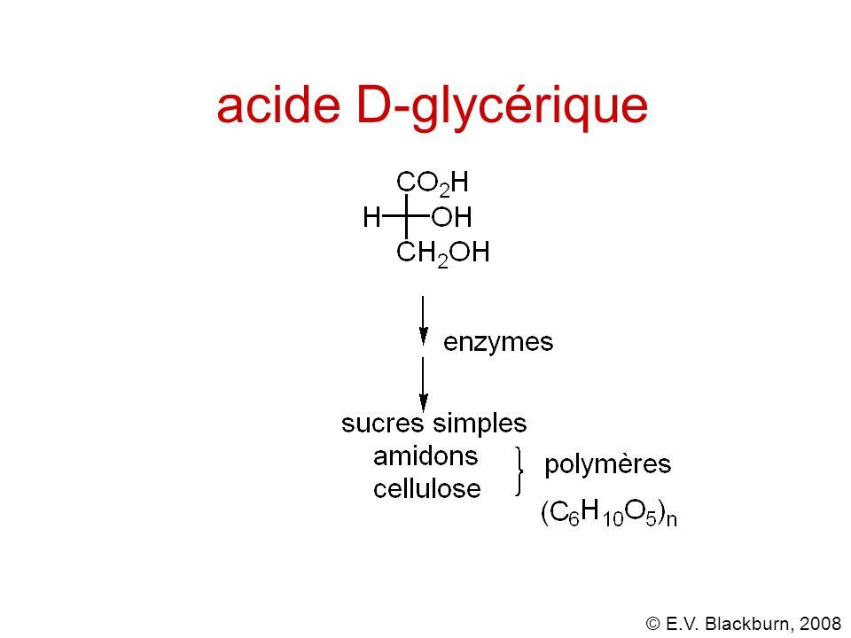 © E.V. Blackburn, 2008 acide D-glycérique