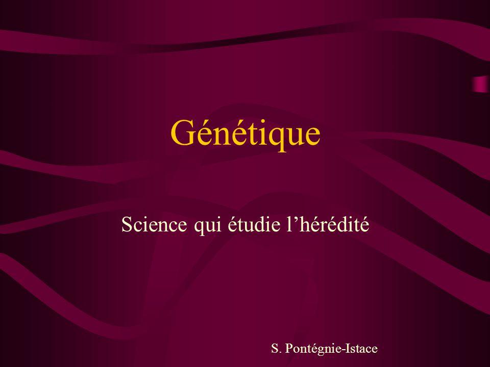 Génétique Science qui étudie l'hérédité S. Pontégnie-Istace