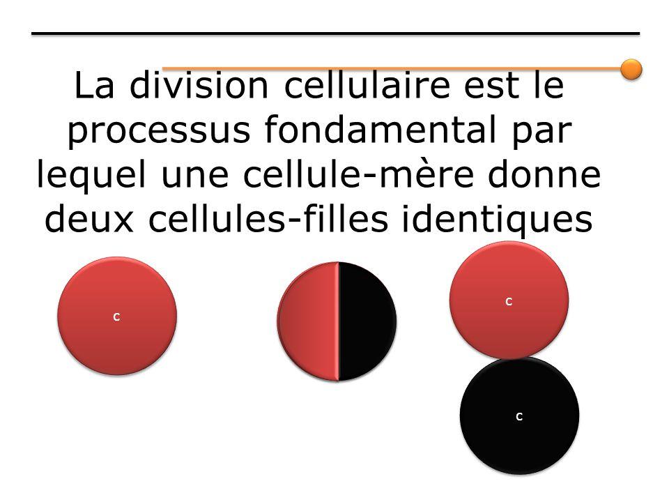 La division cellulaire est le processus fondamental par lequel une cellule-mère donne deux cellules-filles identiques c c c c c c